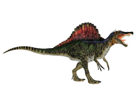 Illustration of a Spinosaurus  dinosaur species  isolated on a white background Stock Photo