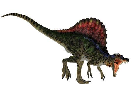 spinosaurus: Illustration of a Spinosaurus  dinosaur species  isolated on a white background Stock Photo