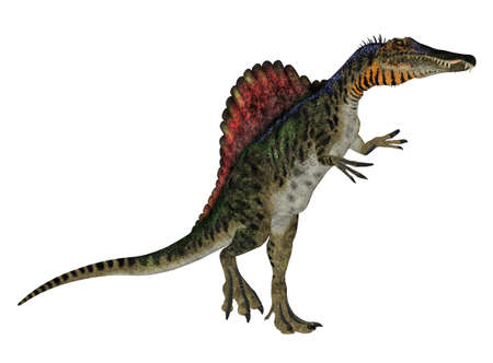 reptilia: Illustration of a Spinosaurus  dinosaur species  isolated on a white background Stock Photo