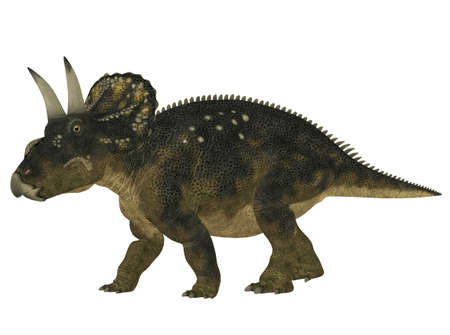 triceratops: Illustration of a Nedoceratops  dinosaur species formerly known as Diceratops  isolated on a white background Stock Photo