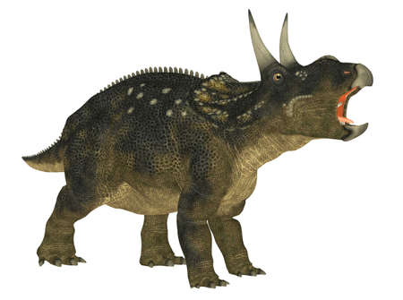 epoch: Illustration of a Nedoceratops  dinosaur species formerly known as Diceratops  isolated on a white background Stock Photo