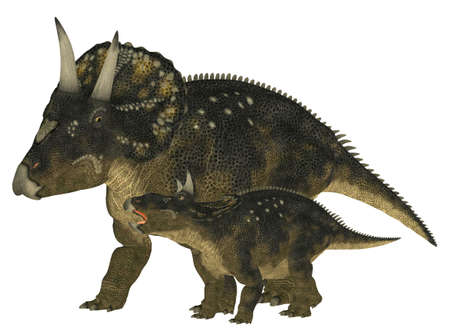 epoch: Illustration of an adult and a young Nedoceratops  dinosaur species formerly known as Diceratops  isolated on a white background