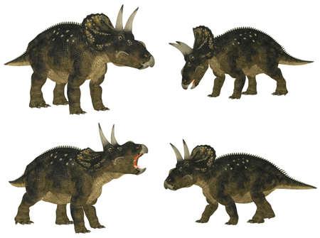 epoch: Illustrazione di un pacchetto di quattro specie di dinosauro 4 Nedoceratops precedentemente noto come Diceratops con diverse pose isolato su uno sfondo bianco