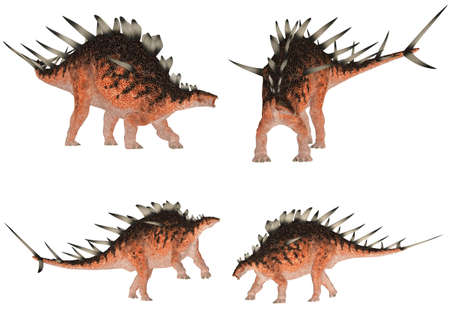 Illustration of a pack of four  4  Kentrosaurus  dinosaur species  with different poses isolated on a white background illustration