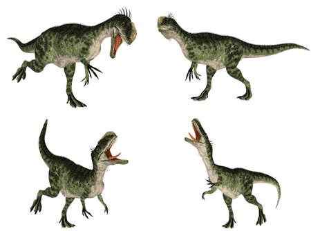 epoch: Illustration of a pack of four  4  Monolophosaurus  dinosaur species  with different poses isolated on a white background
