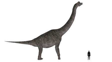 brachiosaurus: Illustration of a comparison of the size of an adult Brachiosaurus with an average adult male human  1 8 meters