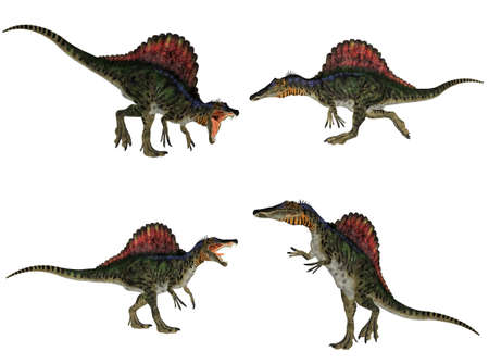 reptilia: Illustration of a pack of four  4  Spinosaurus  dinosaur species  with different poses isolated on a white background Stock Photo