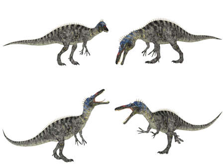 epoch: Illustration of a pack of four  4  Suchomimus  dinosaur species  with different poses isolated on a white background
