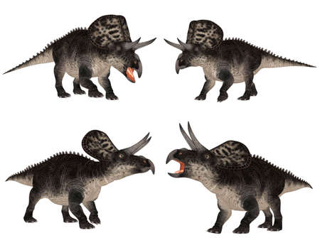 reptilia: Illustration of a pack of four  4  Zuniceratops  dinosaur species  with different poses isolated on a white background