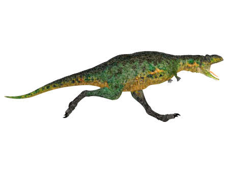 reptilia: Illustration of a Aucasaurus  dinosaur species  isolated on a white background