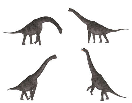 reptilia: Illustration of a pack of four  4  Brachiosaurus with different poses isolated on a white background Stock Photo