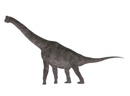 Illustration of a Brachiosaurus  dinosaur species  isolated on a white background illustration