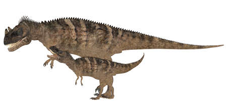 hatchling: Illustration of an adult and a young Ceratosaurus  dinosaur species  isolated on a white background