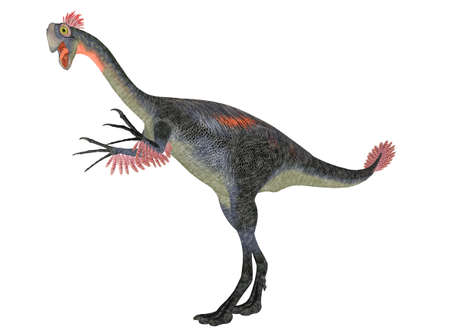 omnivorous: Illustration of a Gigantoraptor  dinosaur species  isolated on a white background