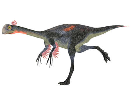 reptilia: Illustration of a Gigantoraptor  dinosaur species  isolated on a white background