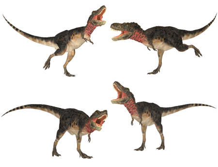 paleontology: Illustration of a pack of four  4  Tarbosaurus with different poses isolated on a white background