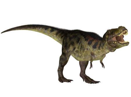 恐竜: 恐竜のティラノサウルス種、白い背景で隔離のイラスト