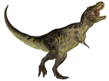 prehistoric: Illustration of a Tyrannosaurus  dinosaur species  isolated on a white background