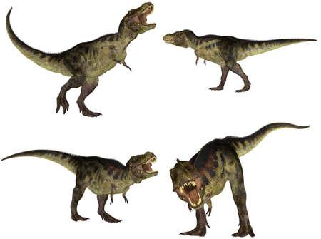 tiranosaurio rex: Ilustraci�n de un paquete de cuatro 4 Tyrannosaurus con diferentes poses aislado en un fondo blanco Foto de archivo
