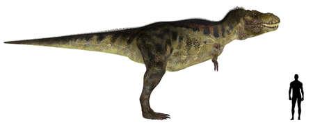 dinosaur: Ilustraci�n de una comparaci�n del tama�o de un tiranosaurio adulto macho con un promedio de adultos humanos 1 8 metros