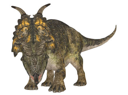 Illustration of a Achelousaurus  dinosaur species  isolated on a white background Stock Illustration - 14105490