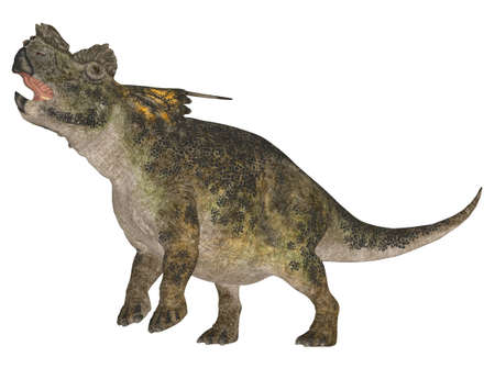 hatchling: Illustration of a Achelousaurus  dinosaur species  isolated on a white background