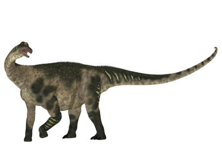 long neck: Illustration of a Antarctosaurus  dinosaur species  isolated on a white background