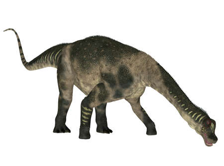 herbivorous: Illustration of a Antarctosaurus  dinosaur species  isolated on a white background