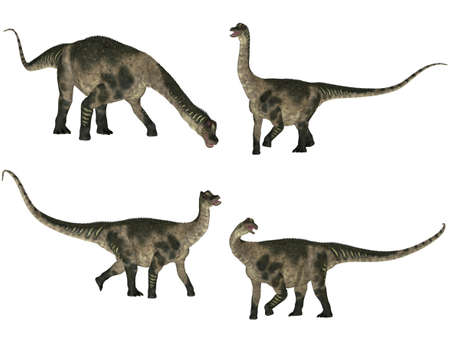 herbivorous: Illustration of a pack of four  4  Antarctosaurus with different poses isolated on a white background