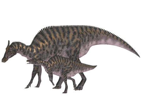 prehistoric animals: Illustration of an adult and a young Saurolophus  dinosaur species  isolated on a white background