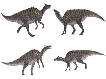 epoch: Illustration of a pack of four  4  Saurolophus with different poses isolated on a white background Stock Photo