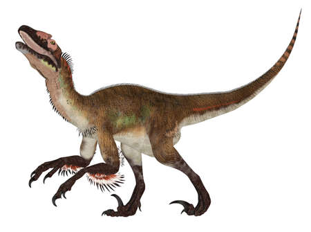 feathered: Illustration of an Utahraptor  dinosaur species  isolated on a white background
