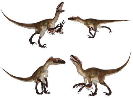 feathered: Illustration of a pack of four  4  Utahraptor with different poses isolated on a white background