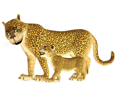 panthera: Illustration of a happy leopard family isolated on a white background Stock Photo