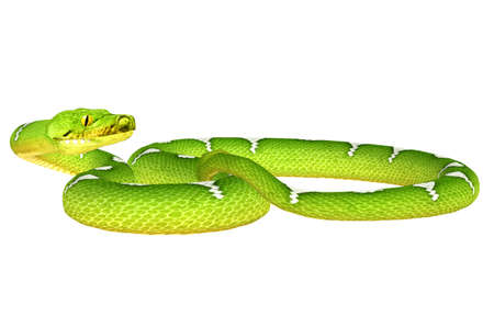 python: Illustration of a Green Tree Python  snake species  isolated on a white background Stock Photo