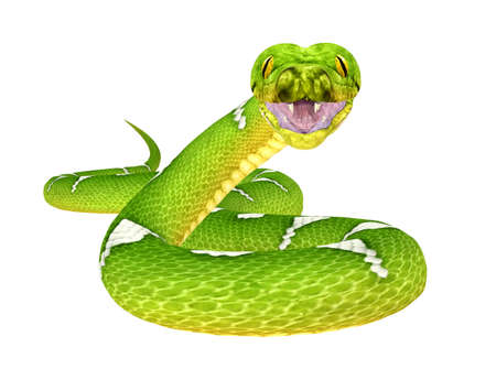 Illustration of a Green Tree Python  snake species  isolated on a white background Stock Photo