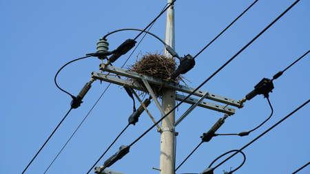 a nest built on a telephone pole.