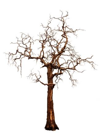 toter baum: ein unfruchtbarer Baum auf wei�em Hintergrund
