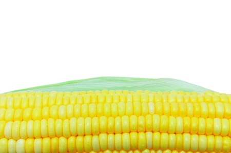 Grains of Ripe Corn with Water Droplets photo