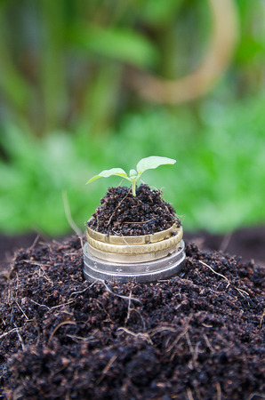 agriculture: trees growing on coins Stock Photo