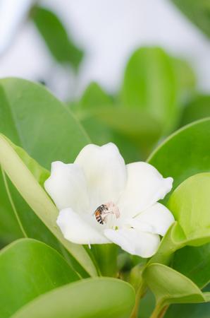 taller: Bee on white flower