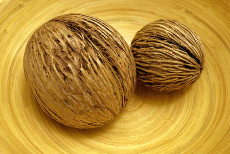 asian cerbera odollams dried seed for decoration Stock Photo