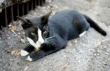 black and white stray cat Stock Photo - 17191178