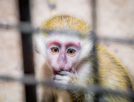 Sad baby monkey jailed behind the fence looking for someones help