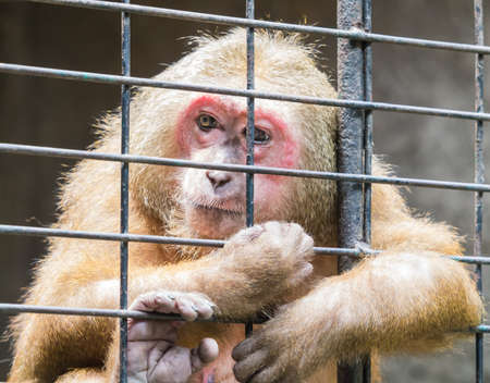 Sad monkey jailed behind the fence looking for someones help