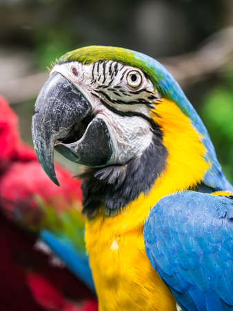 Portrait of colorful parrot from the left side photo