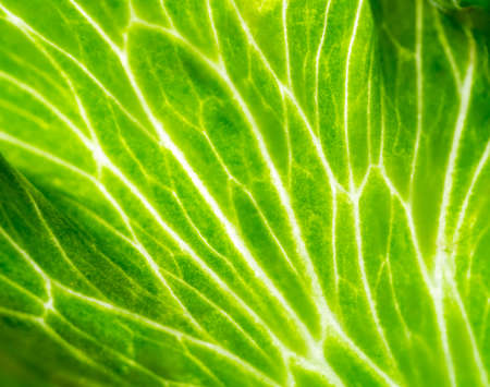 Green leaf texture showing interesting natural pattern