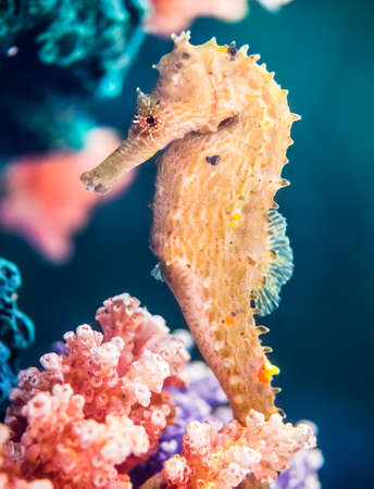 Yellow seahorse at the artificial coral, abstract of marine life