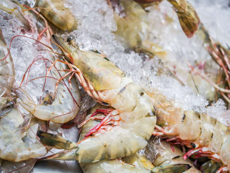 crushed ice: Big tiger prawn, expensive seafood, selling on crushed ice
