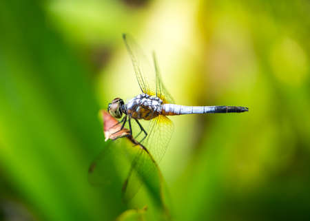 Macro shot of dragonfly on the green leaf